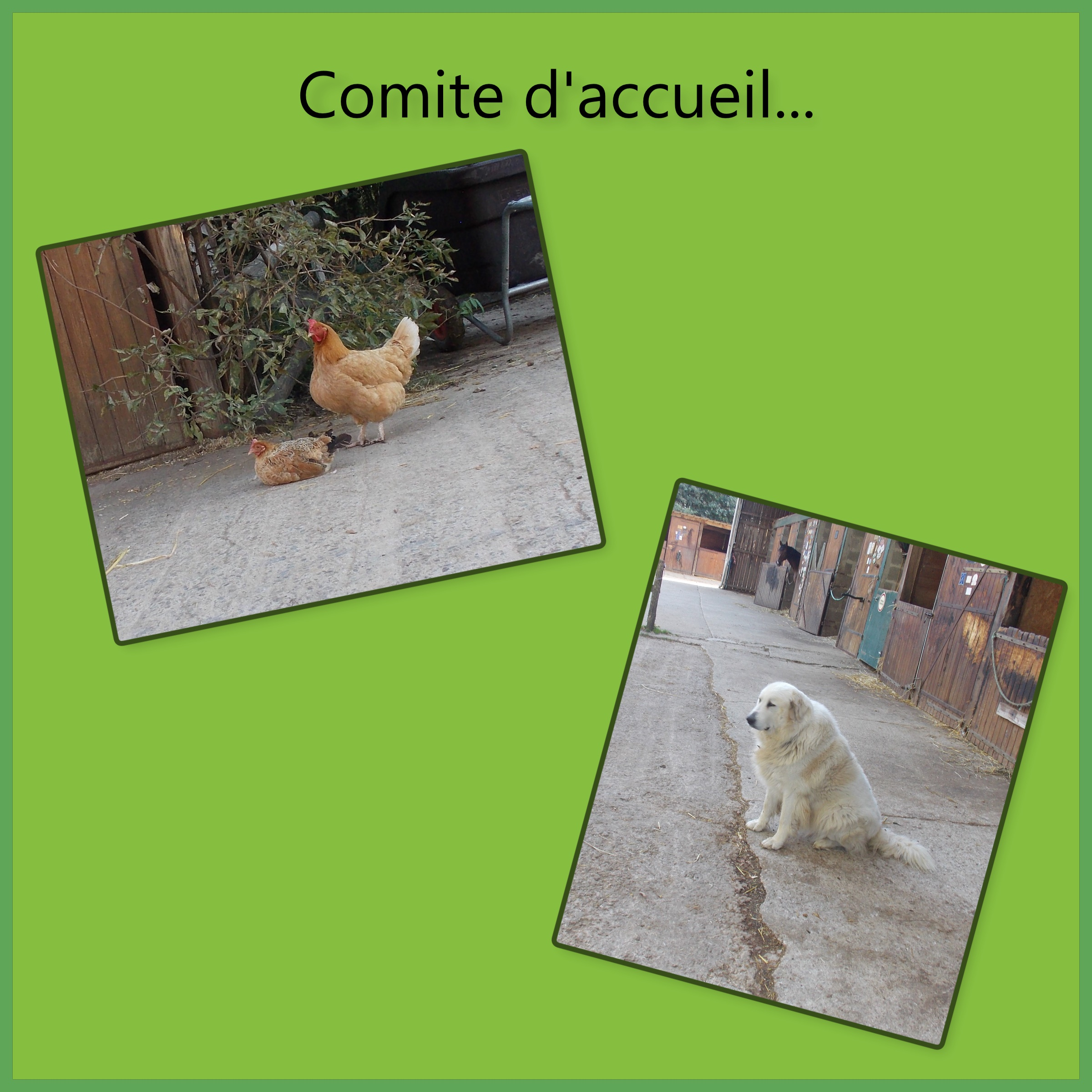 comite d'acceuil